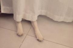 Vorhanghund